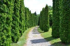Avenues Route trees. 20.6.2015 Mlynany Slovakia Stock Images