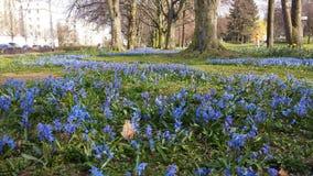 Aveny av blåa blommor Royaltyfri Foto
