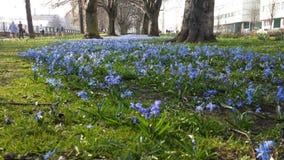 Aveny av blåa blommor Royaltyfri Bild