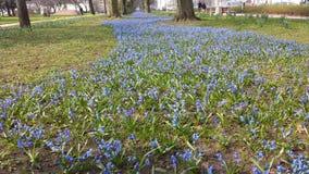 Aveny av blåa blommor Fotografering för Bildbyråer
