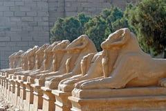 Aveny av dehövdade sfinxerna i den Karnak templet - Luxor, Egypten royaltyfria foton