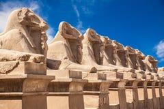 Aveny av dehövdade sfinxerna thebes för tempel för egypt karnakserie Arkivbilder