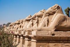 Aveny av dehövdade sfinxerna thebes för tempel för egypt karnakserie Fotografering för Bildbyråer