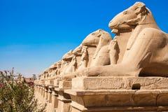 Aveny av dehövdade sfinxerna thebes för tempel för egypt karnakserie Luxor Royaltyfri Bild