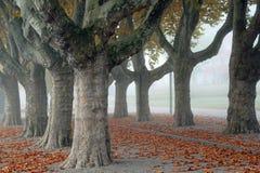 Aveny av London Plantrees Arkivbild