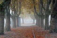 Aveny av London Plantrees Arkivfoton