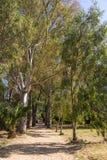 Aveny av platan i den Butrint nationalparken Royaltyfria Foton