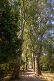 Aveny av platan i den Butrint nationalparken Fotografering för Bildbyråer