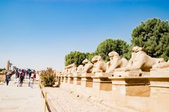 Aveny av sfinxer i Luxor, Egypten royaltyfria bilder