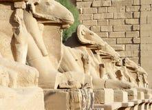 Aveny av sfinxer med RAMs huvud i Luxor arkivfoto