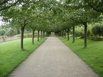 Aveny av trees Arkivfoton