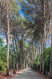 Aveny av trees Arkivbilder
