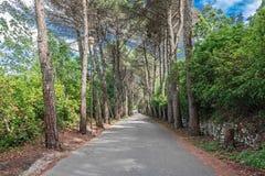 Aveny av trees Arkivfoto