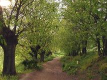 aveny fodrad tree Royaltyfria Foton