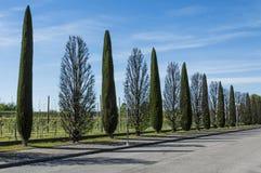 aveny fodrad tree Arkivfoton