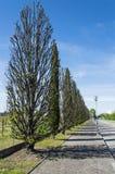 aveny fodrad tree Royaltyfri Foto