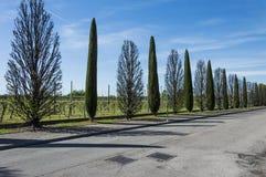 aveny fodrad tree Arkivbild