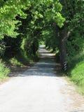 aveny fodrad tree Royaltyfri Bild