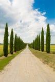 Aveny i den Val d'Orciaen i Siena i Tuscany Arkivfoto