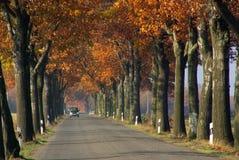 Aveny i fall royaltyfria bilder