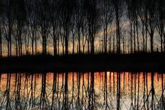 Aveny med träd på den flammande solnedgången i den uppochnervända våren Arkivbild