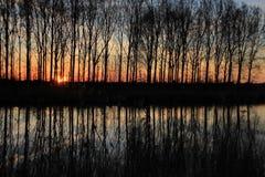 Aveny med träd på den flammande solnedgången i vår Arkivbilder