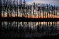 Aveny med träd på den flammande solnedgången i vår Arkivfoto