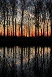 Aveny med träd på den flammande solnedgången i vår Arkivfoton