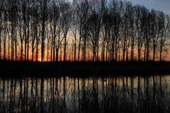 Aveny med träd på den flammande solnedgången i vår Royaltyfria Foton