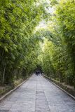 Avenyn av bambuträd, fjärilsvår parkerar, Kina royaltyfria foton