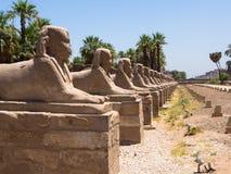 Avenyn av sfinxen på den Luxor templet, Egypten Royaltyfri Fotografi