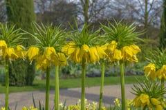 Avenyträdgårdar på Regent's Park i London Arkivbilder