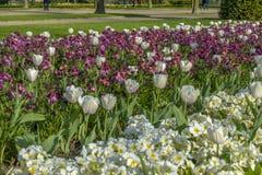 Avenyträdgårdar på Regent's Park i London Arkivbild