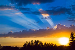 aver lasów promieni słońca Obrazy Stock
