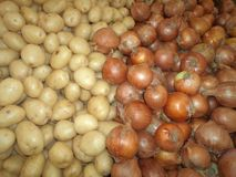 Average picking of onions and english potatoes stock photos
