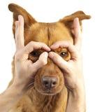 Avere divertimento con il cane Fotografia Stock
