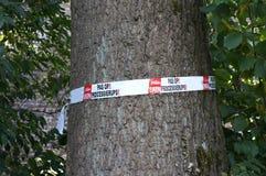 Avertissement processionary de chêne aux Pays-Bas Image libre de droits