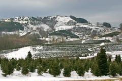 avery圣诞节县农厂结构树 库存照片