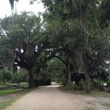 Avery Island Images stock