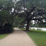 Avery Island. This is a gravel road in Avery Island displaying an oak tree with moss hanging and the Bayou in the background stock photos