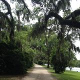 Avery Island. This is a gravel road in Avery Island displaying an oak tree with moss hanging and the Bayou in the background stock images