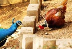 Aves Foto de archivo libre de regalías