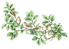 Aves canoras da aquarela no ramo de árvore Fotografia de Stock