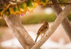 Aves canoras no jardim do verão foto de stock