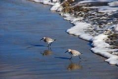 Aves costeras foto de archivo