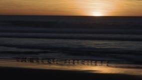 Aves costeras en la puesta del sol Imagen de archivo libre de regalías