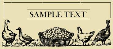 Aves de corral - tarjeta de la muestra Imagen de archivo