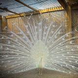 Aves de lujo Imagenes de archivo