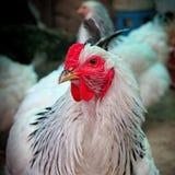 Aves de lujo Imagen de archivo libre de regalías
