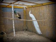 Aves de lujo Fotos de archivo libres de regalías